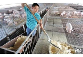 养猪场饲料居然不是主要成本 那会是什么?