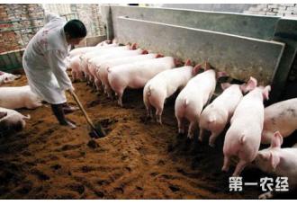 重庆出台生猪养殖企业贷款贴息政策 推动生猪产业稳产保供