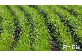 大棚种植豆芽的技术