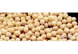 豌豆在秋季的种植 要掌握这一些