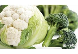 花菜种植该如何去保护