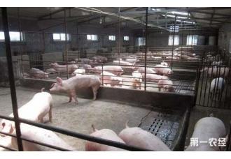 养猪的利润和成本 怎样提高利润