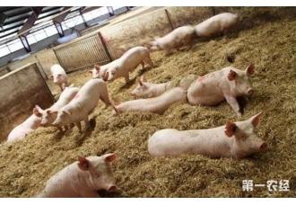 散养猪的好处有哪些