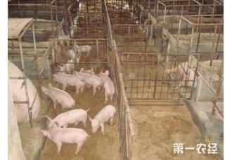 猪要怎么养 怎么喂它才会长得比较快