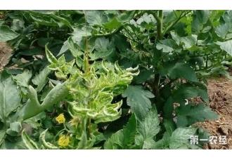 种植蔬菜的过程中染上了病害怎么办