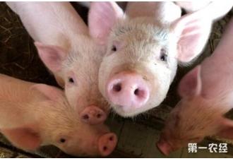 农民养猪是一种污染产业吗 我们一起了解一下