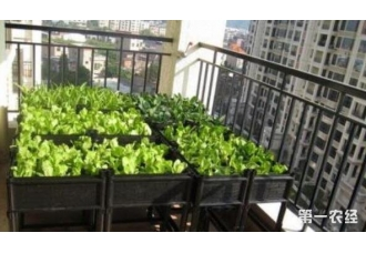 在阳台种植蔬菜一直会长虫子 有没有什么方法防范