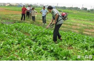 种植户农药使用应该注意哪些?