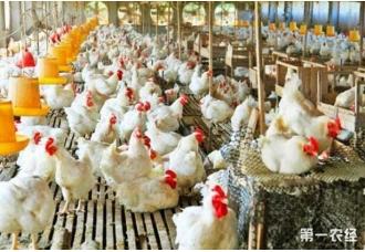 打造一个小型的鸡场要花费多少钱
