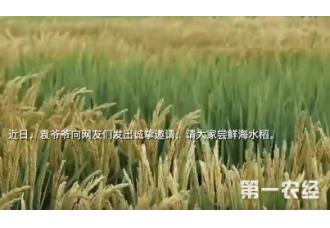 袁隆平视频呼吁关注新型的海水稻
