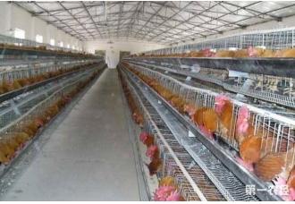 想要养鸡 场地要做好哪一些措施