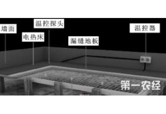 网床电热孵化小鸡的技术方法你知道吗?