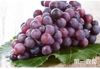 经常吃葡萄有好处吗?有哪一些好处