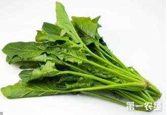 在十月份要多吃什么蔬菜