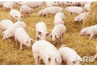 在冬季养殖畜牧要注意哪一些