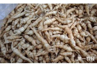 螺丝菜的种植方法你知道几点?