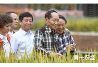 袁隆平水稻新目标