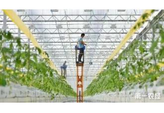 温室大棚的无土栽培技术助力新型农业发展