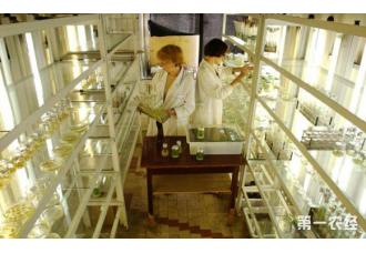 农业技术革新中的基因编辑的机遇