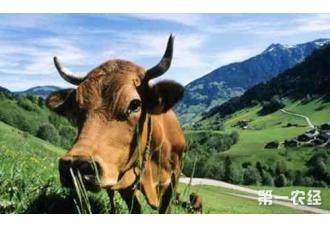 黄牛饲养技术都有哪些