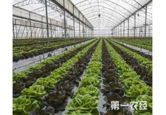 种植大棚蔬菜的病虫防范