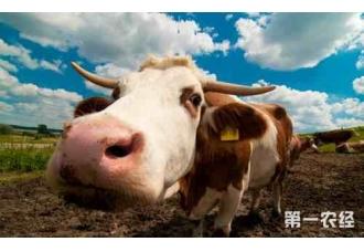 病牛的各种注射方法,你都知道吗?