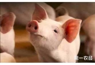 养殖野猪的条件有哪些,怎么养!