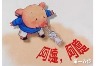 猪群接种失败的原因是什么呢