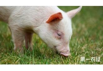 母猪不同阶段的饲养管理方法,你知道吗