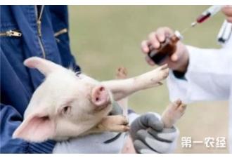 母猪的生产力应该如何提升呢1