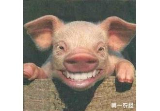 夏季猪病都有哪些,你都清楚吗