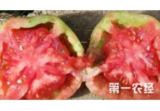 种植番茄出现空心要如何预防