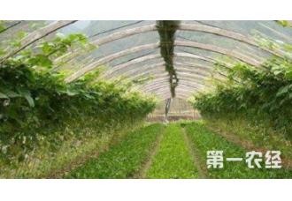 种植大棚蔬菜要如何去预防病害