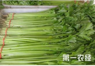 种植芹菜发生菌核病这一些要做好