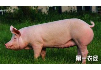 养猪稳赚不亏的三招,你知道吗
