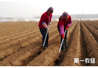 春季土豆怎样种植,你知道吗
