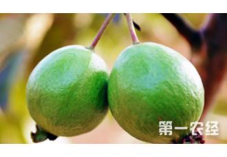 种植西瓜出现空心要怎么去解决预防