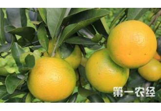 要怎么去种植橙子 有哪些要点