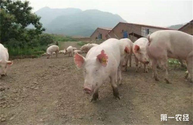 散户养猪管理知识