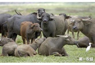 牛的年龄应该怎么看呢 通常我们怎么去判断呢