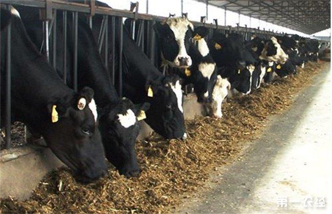 夏季奶牛养殖注意事项