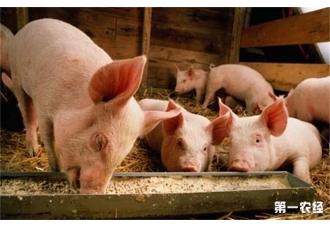 养猪驱虫的注意事项都有哪些呢