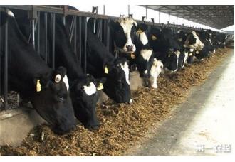 夏季奶牛养殖注意事项是什么 你知道吗?