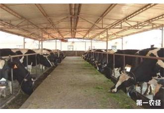 牛场应该如何管理才能预防病害呢 你知道吗