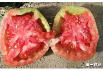番茄出现空心要如何去预防管理