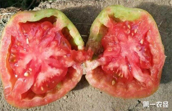 番茄在种植过程出现空心要
