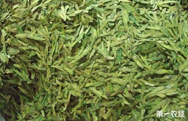 龙井茶的来历和传说