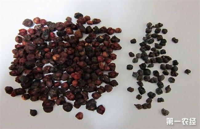 五味子种子处理技术