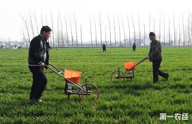 小麦 冬季施肥 注意事项