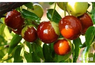 秋天的到来成熟的水果有哪些?